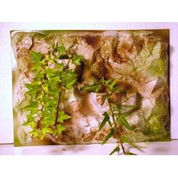 RoDeX Fundal 3D cu ghiveci de plante