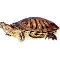 Hrana broaste testoase si reptile si produse de intretinere