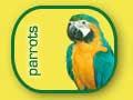 Papagali mari